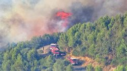 Feux de forêts: des centaines d'hectares ravagés dans 14
