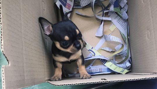 강아지 경매장에는 '0원 짜리' 강아지가