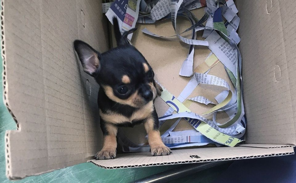 경매에서 낙찰된 강아지들은 종이상자에 담겨 낙찰자에게