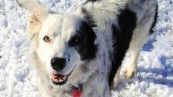세계에서 가장 똑똑한 개가 숨졌다 (생전