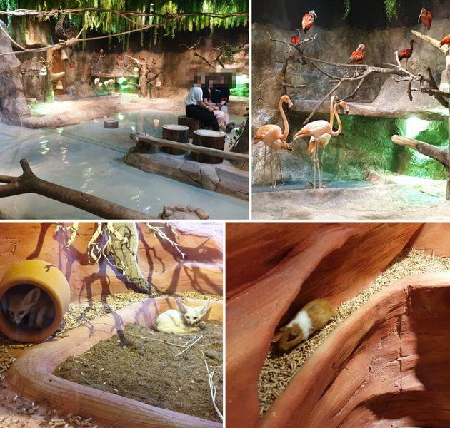 전시관 내 동물들이 관람객의 시선을 피할 수 있는 은신처는 없어 보였다. 사진 (위 왼쪽)홍학과 홍따오기, (위 오른쪽) 장다리물떼새와 뒷부리장다리 물떼새, (왼쪽 아래) 사막여우,...