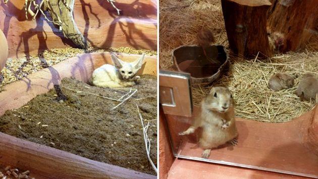 서울에 개장한 이 실내체험 동물원은 '유사 동물원'이 왜 문제인지