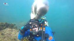 Tenerezza sott'acqua. La foca