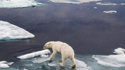 Greenpeace s'inspire de FaceApp pour sensibiliser au réchauffement
