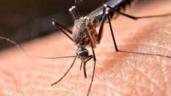 Floride: un virus potentiellement mortel transmis par les moustiques
