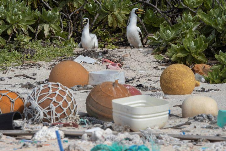 Les déchets en plastique sont facilement ingérés par les oiseaux ou les tortues.