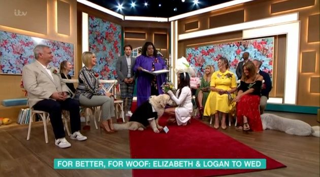 A woman married her dog in surreal scenes on Tuesday's This
