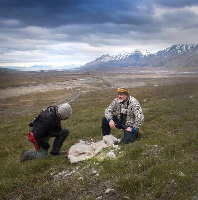 Κλιματική αλλαγή - ώρα μηδέν: 200 τάρανδοι βρέθηκαν νεκροί από την πείνα στην