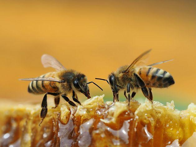Le miel est-il meilleur que le sucre pour la santé