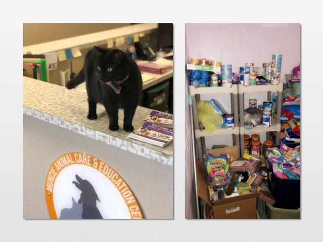 動物ケアシェルターにいる猫(左)と集まった猫用品(右)マンシー警察のTwitterから