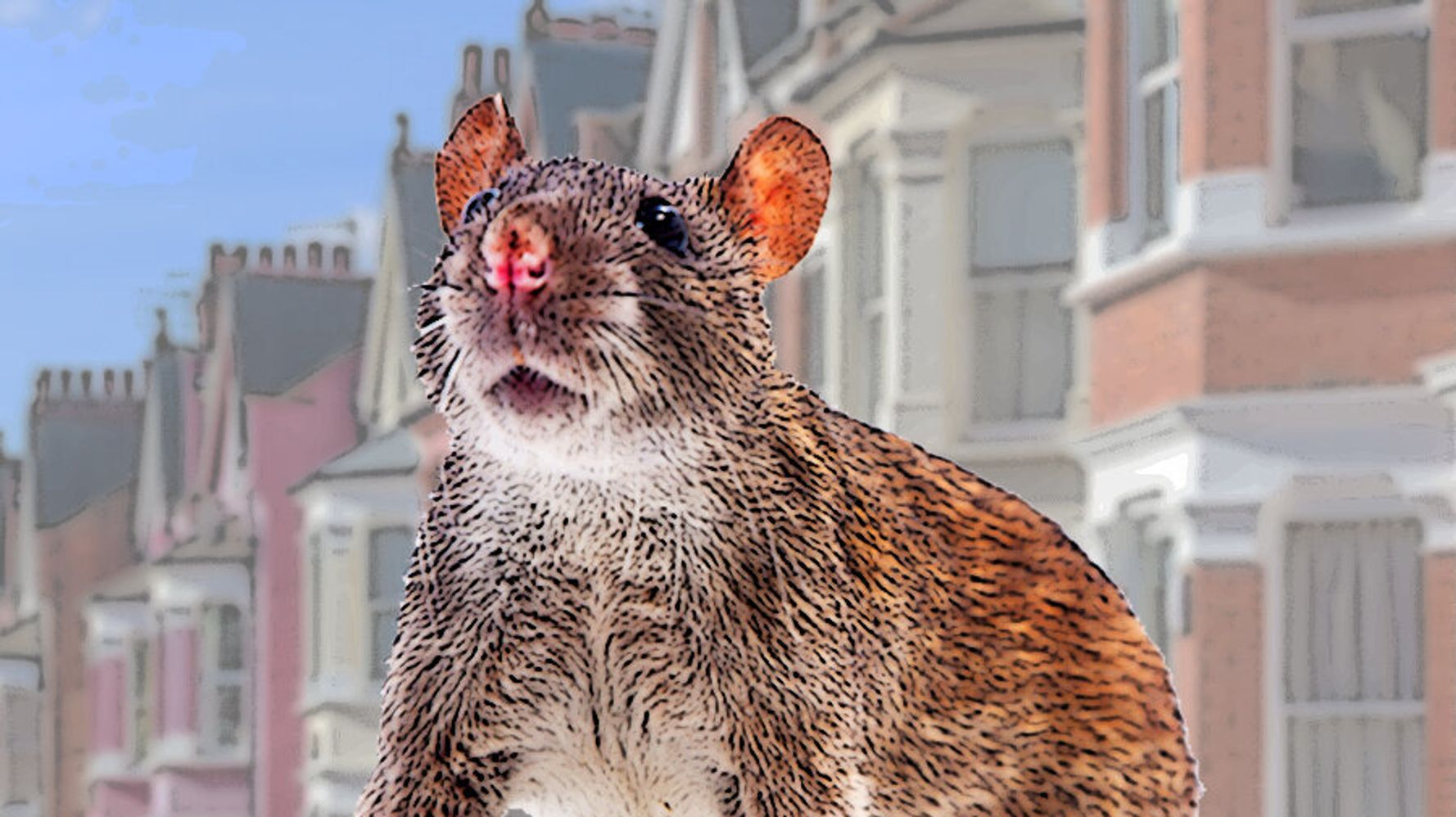 Brown Rats Are Plaguing People's Homes This Year – Here's Why