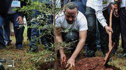 In Etiopia piantati 350 milioni di alberi in 12 ore.