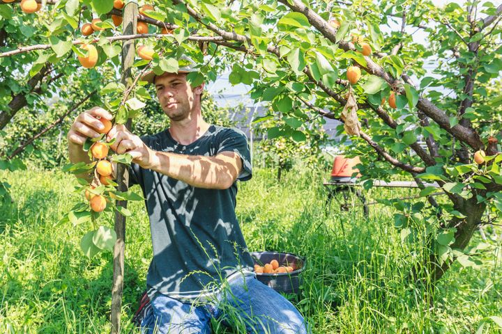 Eating fruit that's organically grown can provide you with 20% to 40% more antioxidants than conventionally grown fruit.