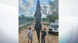 Αυστραλία: Μυστήριο με ορθοπεδική λάμα που βρέθηκε στο σώμα τεράστιου