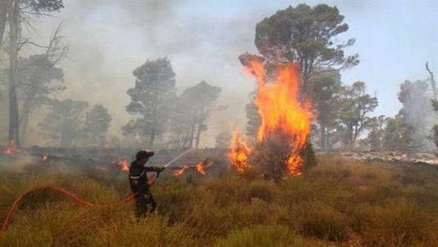 Blida: Un mort et quatre blessés dans un