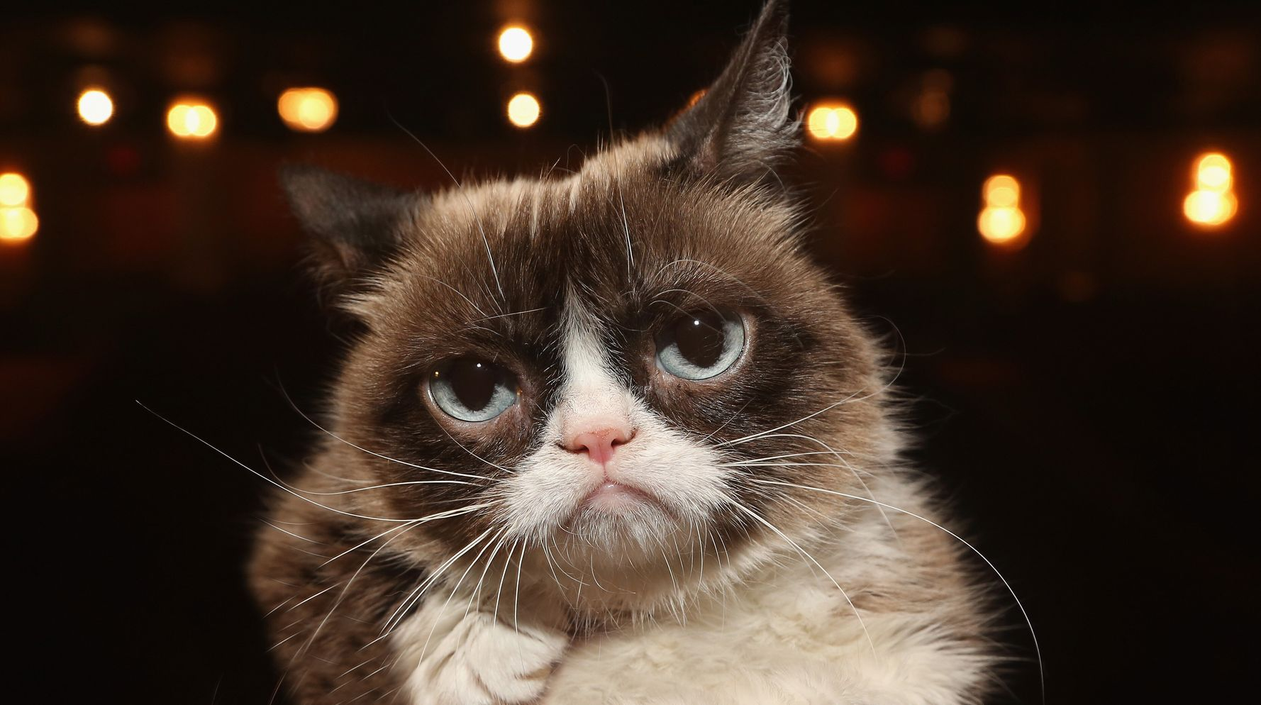 Cute Animals To End The Week: Is This Angry Fella Grumpy Cat's Protégé?