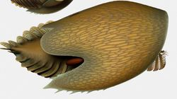 ▷Canadians Unearth New Species From Under 500-Million-Year-Old