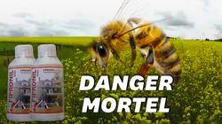 En Russie, 300.000 colonies d'abeilles ont été