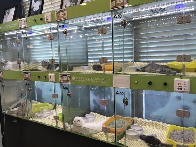 펫숍에는 한국인들이 주로 선호하는 견종인 몰티즈, 푸들 등이 판매되고