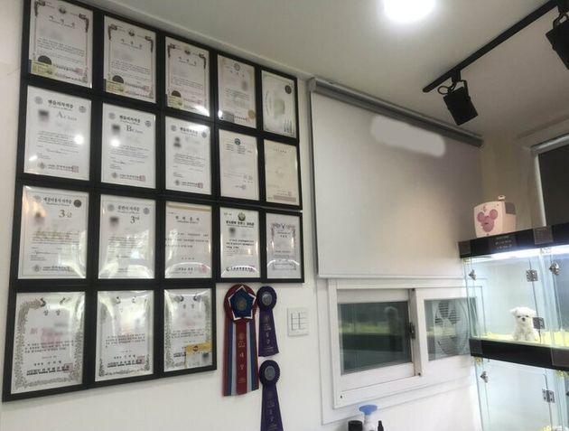 펫숍 벽면에는 사업자등록증, 반려동물 관련 학위와 자격증, 도그쇼 수상 리본 등이 빼곡하게 걸려