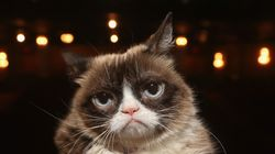Cute Animals To End The Week: Is This Angry Fella Grumpy Cat's