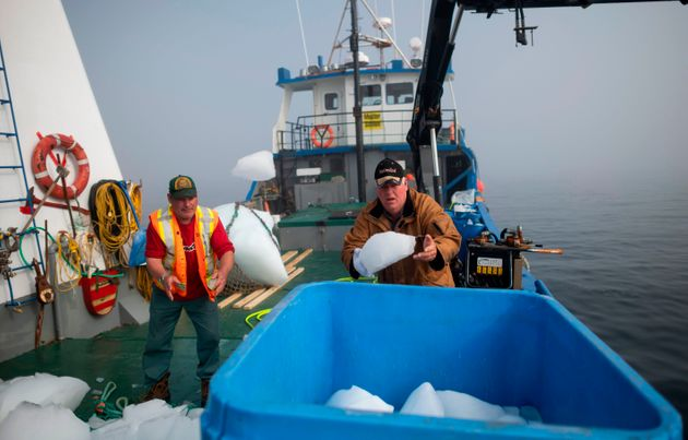 Profession: chasseur d'icebergs au
