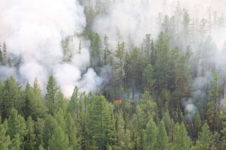 This photo taken on Monday, July 29, 2019 and released by Press Service of the Ministry of Forestry of the Krasnoyarsk Territ