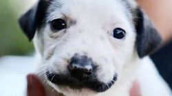 This Tiny Puppy's 'Mustache' Is Probably Better Than