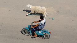 Pour l'Organisation de Défense du Consommateur, la hausse des prix du mouton est due à