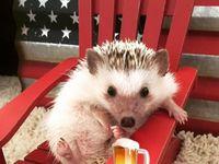 Mouth tumor hedgehog Pet Hedgehog