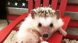 Why I'm Mourning The Death Of My Hedgehog As Much As Any Dog Or