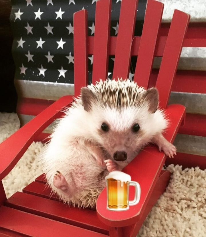 Boba drinking a cold one on Memorial Day.