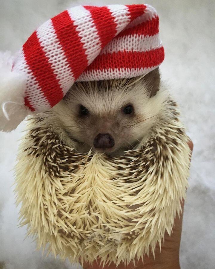 Boba posing in her Christmas beanie.