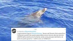 La Guardia Costiera salva un delfino a Lampedusa. L'ira degli utenti su Twitter: