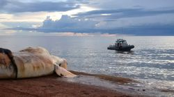 Ottawa Lifts Speed Limits For Gulf Of St. Lawrence After No Whales
