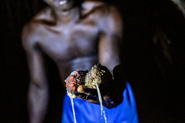 Οι αγρότες που προσπαθούν να σώσουν το πολύτιμο «αγγούρι της θάλασσας» - Γιατί στοιχίζει 3.000 το