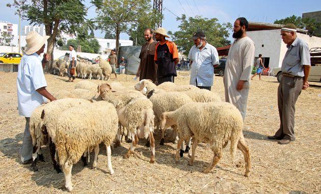 Préparatifs de l'Aid El idha: 2750 moutons distribués au profit des familles à revenu limité, un plan...