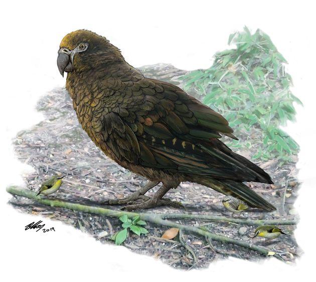 Νέα Ζηλανδία: Ανακαλύφθηκε το απολίθωμα του μεγαλύτερου παπαγάλου που βρέθηκε στη