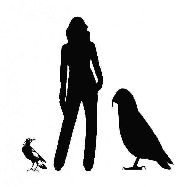 Extinct Giant Parrot Stood At 1m Tall And May Have Devoured Other Parrots