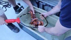 Το ενυδρείο του Ορεγκον απελευθερώνει γιγαντιαίο χταπόδι πίσω στην