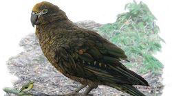 Nouvelle-Zélande: découverte des restes d'