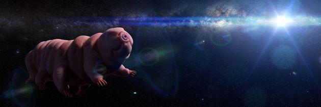 Les tardigrades sont les êtres vivants les plus résistants qui existent sur Terre. Et il...