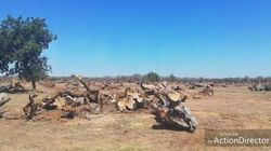 La Xylella ha trasformato il Salento in un deserto: il verde degli ulivi secolari non c'è