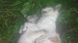 Trovati 11 gatti morti in provincia di Cuneo. Forse sono stati