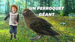 Des fossiles de perroquets géants découverts en