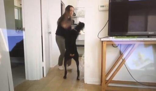 Σάλος στο Λος Άντζελες: Youtuber ανέβασε κατά λάθος βίντεο που φέρεται να κακοποιεί τον σκύλο