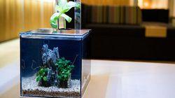 Store: Kickstarter's Favorite Aquarium Doubles As An Herb Planter That Filters The