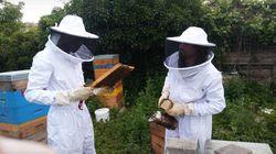 Une formation d'apiculteur, un nouvel espoir pour ces migrants à