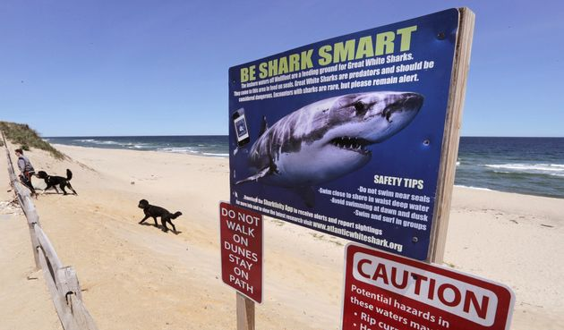Γιατί οι καρχαρίες επιτίθενται σε