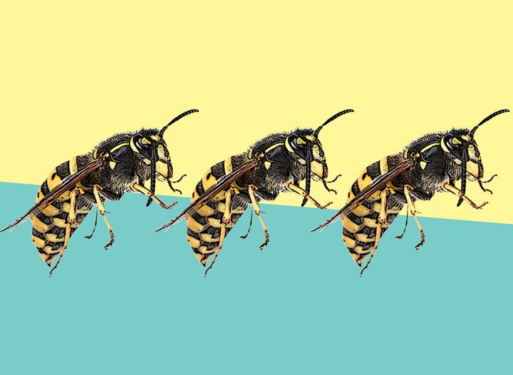 We're Due A 'Bumper Wasp Season' – Here's Why That Might Be A Good